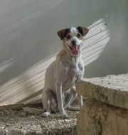 Caneli3 ältere Hundedame sucht ihr