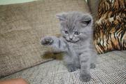 wer hat eine Kitten zu