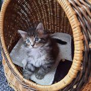 Katzensitter Urlaubsbetreuung