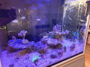 Meerwasser Aquarium komplett mit Technik