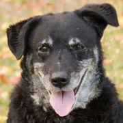 Nerina - Mischling - 7 Jahre - Tierhilfe