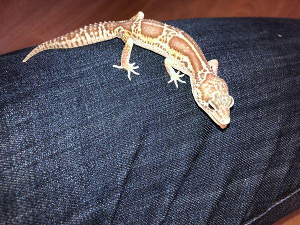0 1 Raptor het Diablo