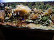 Meerwasseraquarium inkl Inhalt