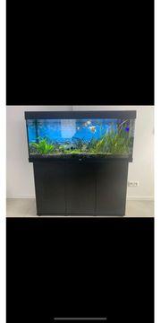 Juwel Rio 240 Aquarium KOMPLETT