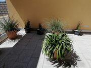 6 Pflanzen 120 Euro