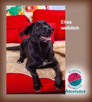 Elisa - zeigt uns hier wie