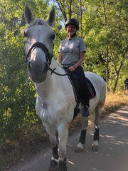 Suche Pferd Pony zur Verfügung