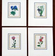 Maund-Blumen-Kupferstiche-ca 1830