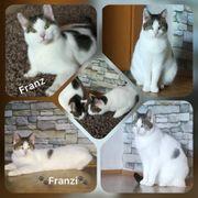 Katze Franzi und Kater Franz
