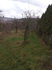 Obstwiese am Osthang oberhalb von