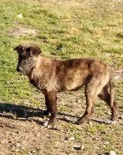 Hundemädchen BIGGI sucht DICH -