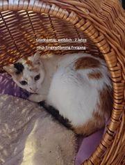Zuhause gesucht f Tierschutz - Katzen