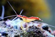 Meerwasser Fische Garnelen Korallen