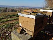 Bienen auf Zanderwaben mit Beute