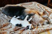 Panda Schmusekater sucht Traumfamilie