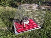 Hunde - Transportkäfig - NEU wegen Umzug