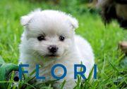 kleine süße Therapie Hunde