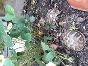 Schildkrötenbabys aus Isselburg