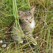 niedliche Kitten suchen neues Zuhause