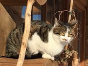 Katze vermisst entlaufen gesucht wir
