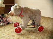 Steif Bär auf Räder
