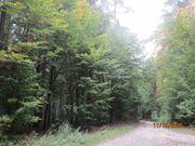 Waldgrundstück 3 ha Mischwald