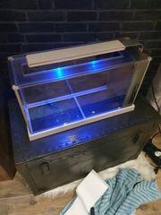 Gebrauchtes Fluval spec Nano Aquarium