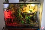 Wasseragame mit Terrarium und viel