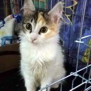 Sanftes Katzenmädchen Marlene möchte ihren