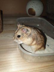 Mehrere Hamster suchen ein neues
