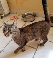 liebe und verspielte Katze Saphira