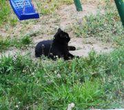 wir haben eine katzen dame