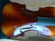 Alte Geige Gemälde Magnolie Blüte