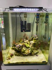 Meerwasser NanoCube 60l