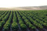 Gärtner Landwirt im Freiland-Gemüsebau m