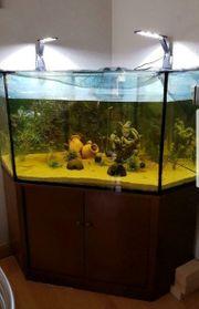 Aquarium 320Liter