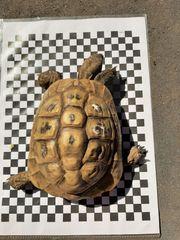 Landschildkröten 1 1
