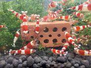 Mini Ziegel für Aquarium