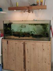 Aquarium mit Axolotl 1 2 -