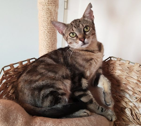 LETICIA - Liebenswertes Katzenmädchen sucht Familie
