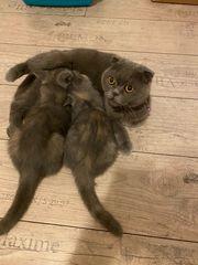 5 Kätzchen wie Puppen