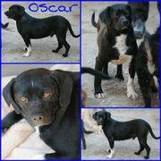 Oscar braucht Liebe