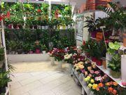 Gut eingeführter Blumenladen in TOP-Lage