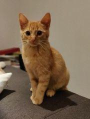 Junge Mischlingskatzen Kater