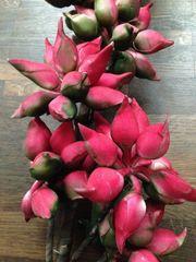 Dekoblumen Pflanzen Vase rot pink