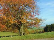 Herbsturlaub mitten im Geo-Naturpark Odenwald