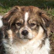 Elodie 1 Jahr - Spaniel-Mix - Tierhilfe