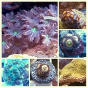 Diverse Korallen Ableger