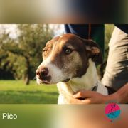 Pico - Wildfang sucht liebevolles Zuhause