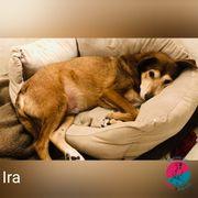 Ira - Liebe Hundeseele auf der